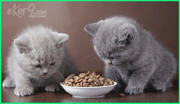 Anak Kucing Makan Berapa Kali Sehari Dunia Fauna Hewan Binatang Tumbuhan Piaraan Anak Kucing Gemas Bayi Hewan