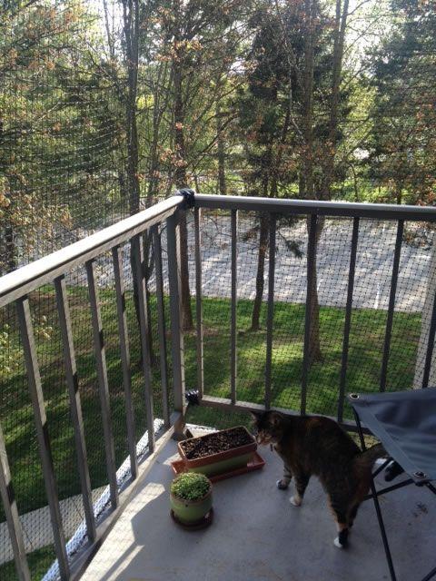Diy Cat Enclosure Balcony : Best Images About Cat Enclosures On Cats   Diy Cat  Enclosure