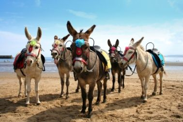 Donkeys at Scarborough beach, north Yorks
