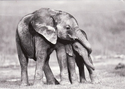 Like children-elephants must be disciplined by older members to turn into responsible members of the elephant society.