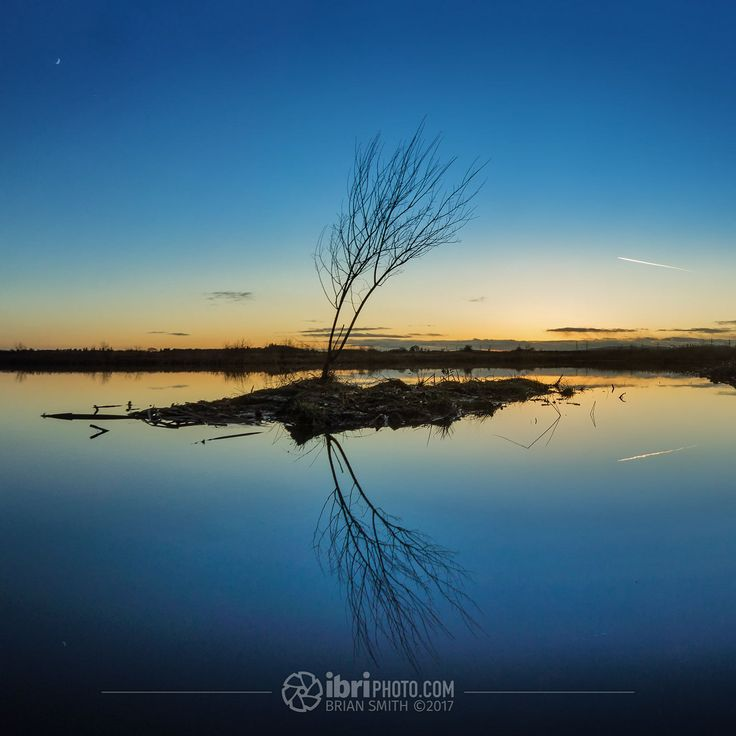 Early evenings crescent #Moon echoed in the shape of the tree and its reflection. Headed down to catch a sunset stayed through until even the #bluehour had faded.  #evening #scotland #Clackmannanshire #RiverForth #reflections #visitscotland #skylovers #instascotland #eveningsky #dusk #scotspirit #landscape_lovers #insta_scotland #sunsetlovers #loves_scotland #trees #landscapephotography #lovescotland #ig_scotland #landscapes #tree #ukpotd #scotland_greatshots #icu_britain #icu_scotland #moon…