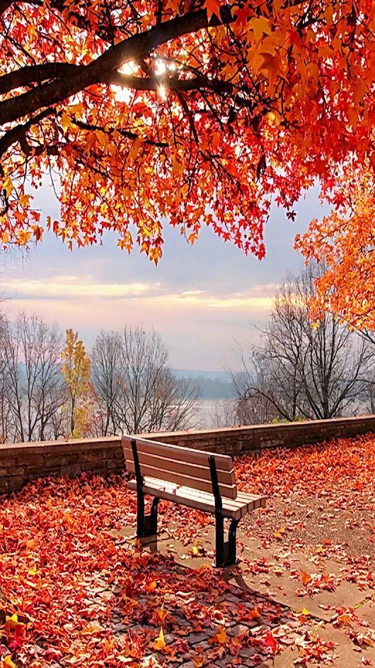 Дмитрий Шамшурин | Осенние картинки, Осенние виды, Осенний ...