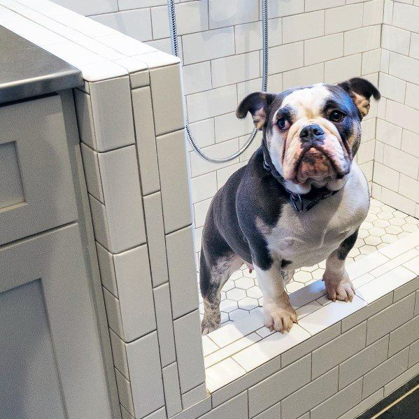 Top 60 Best Home Dog Wash Station Ideas Canine Shower Designs Dog Wash Dog Washing Station Dog Daycare Business