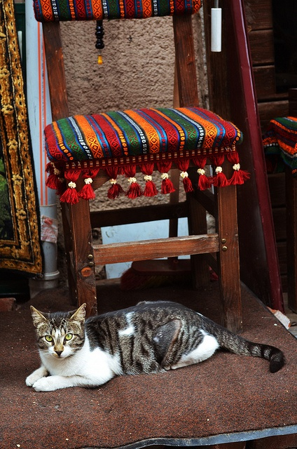 Istanbul_cat_chair by chiang_benjamin, via Flickr