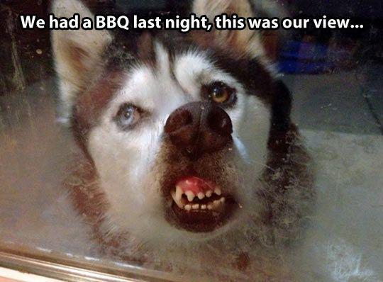 Meme Funny Husky Dogs : 12 best funny huskies images on pinterest funny husky funny stuff
