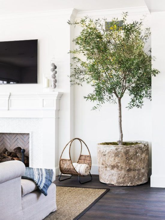 Indoor olive tree in white living room on Thou Swell @thouswellblog