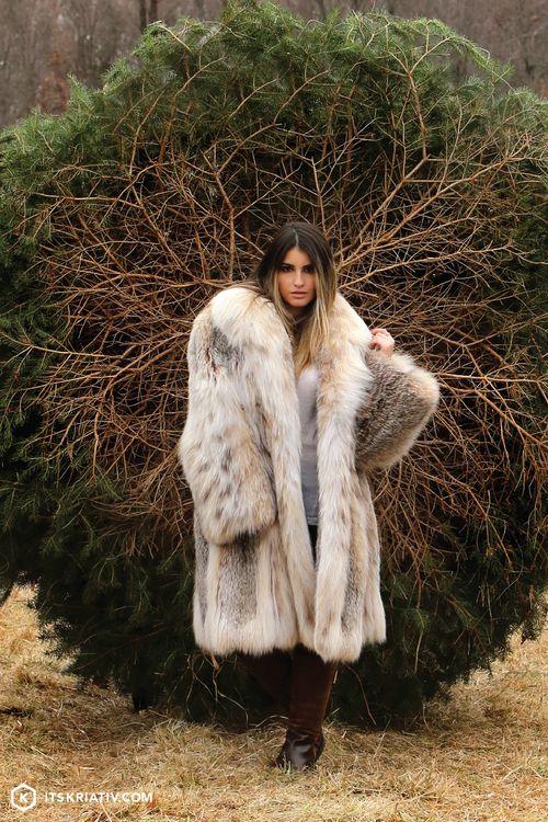 Chinchilla For Sale >> Christmas Tree Hunt | Pelz, Nerz und Jacken