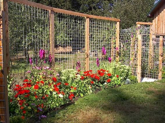 Garden trellis panels which become a fence... This is a dream fence for anyone in deer country. Very slick and very worth sharing.