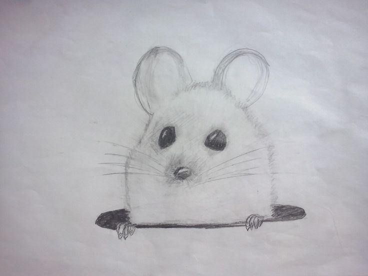 Line Drawing Rat : 42 best #mice & rat drawings images on pinterest rats pet