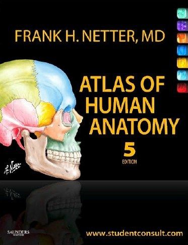 Frank H Netter atlas of human anatomy pdf free download: Its late night and i am going to share with you a comprehensive book of human anatomy . Atlas of human anatomy is most dynamic book of human anatomy . This book (Frank H Netter atlas of human anatomy pdf free download) is about of anatomy