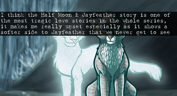 Most Tragic Love Story: 213 Best Warrior Cats Images On Pinterest