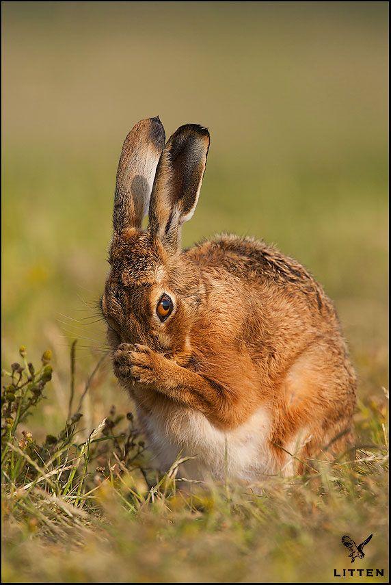 146. Hare  * (gebruikt bij manden vlechten rechts) *