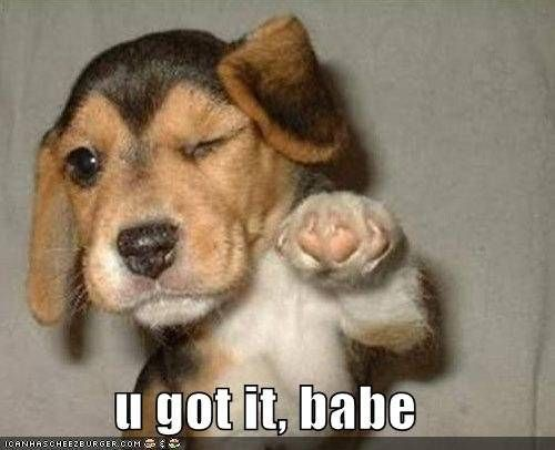 just cool pics | Cool dog - Funny pictures