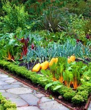 Kitchen Garden | Jardin Potager Part 76