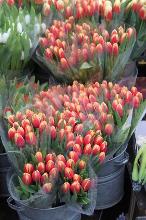 Amo los Tulipanes..!!! -- Gardening