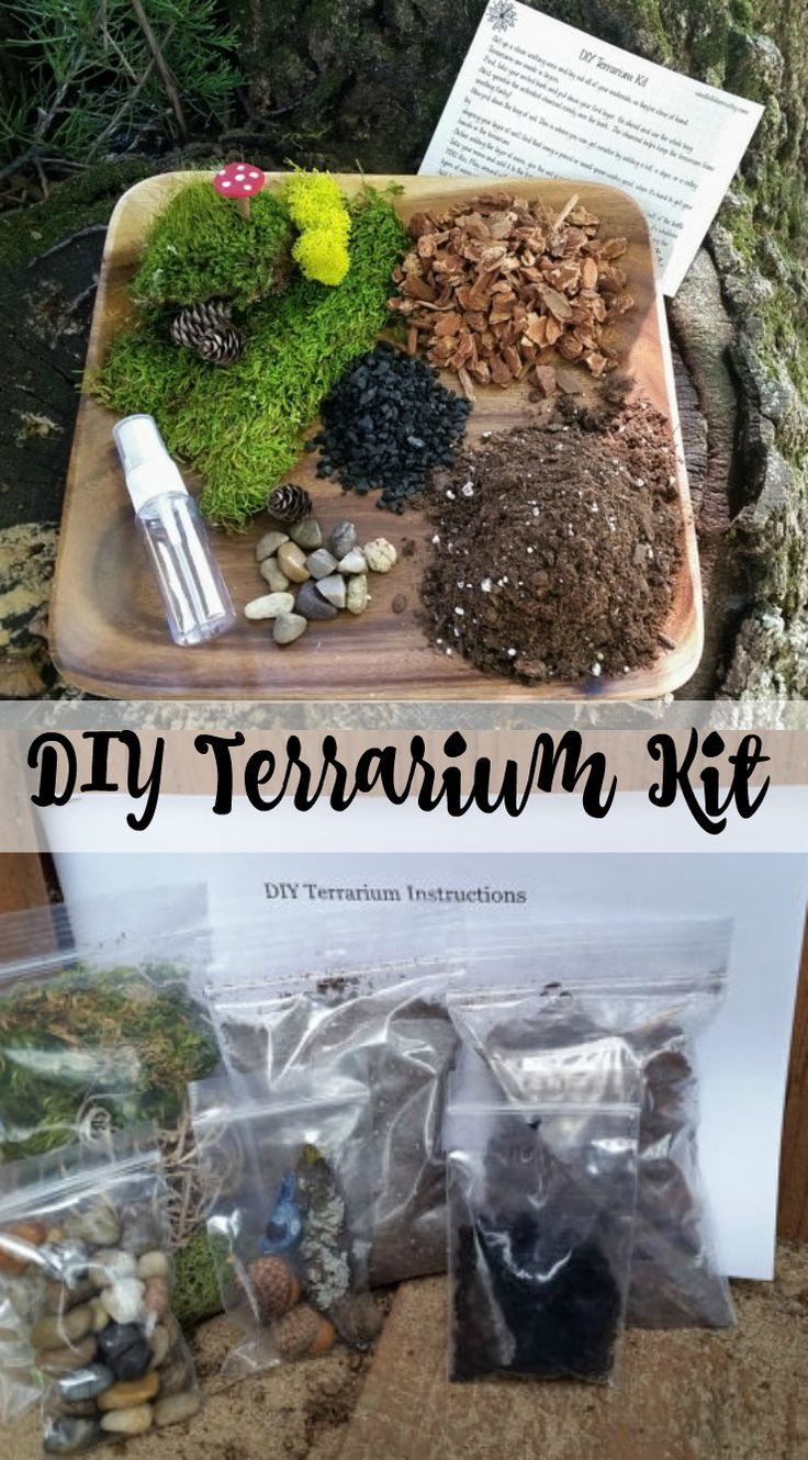 The Perfect Diy Terrarium Kit All You Need Is A Container Make A