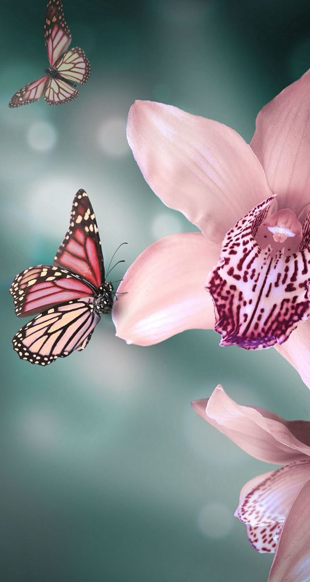 #flowers #wallpaper #background #iphone #orchid #butterfly