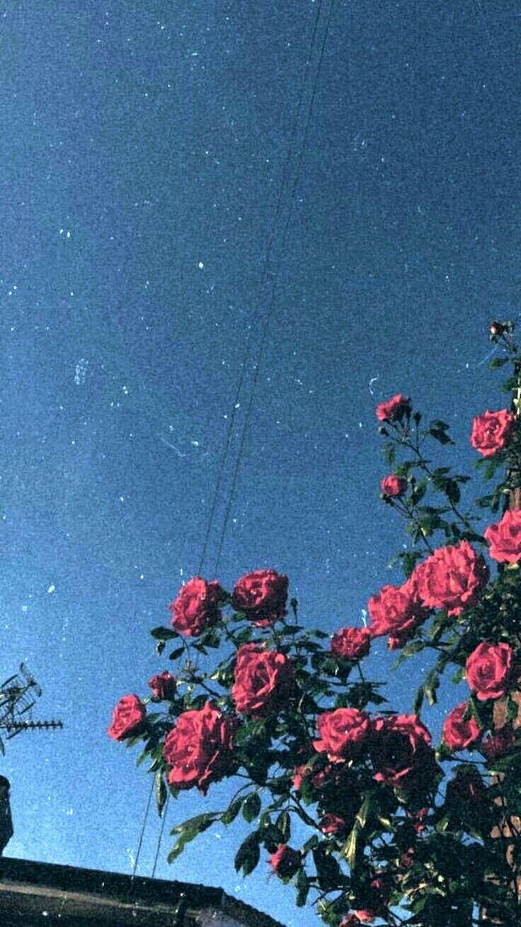 Background Tumblr Beautiful Aesthetic Night Dark Stars Pink Flower Sky Landsca Flower Iphone Wallpaper Iphone Background Summer Aesthetic Wallpapers