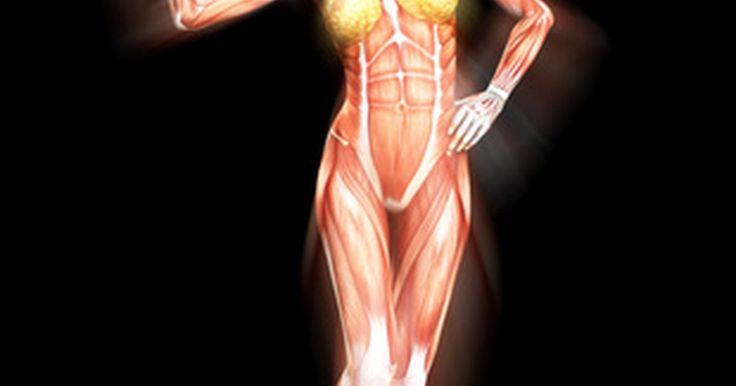 ¿Qué es la respiración anaerobia en los seres humanos?. Todas las células, ya sea las que son parte de la vida vegetal como las del cuerpo humano, o incluso las bacterias, deben utilizar la respiración celular para producir la energía que necesitan para vivir. Las células generan enzimas para crear energía utilizable de la glucosa. Las células pueden descomponer la glucosa a través de la respiración ...