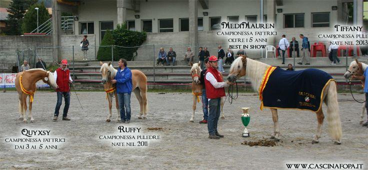 le mie campionesse @Jules Grossman alla mostra del cavallo haflinger di Clusone (BG) - settembre 2013