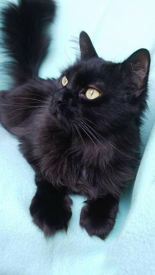 Adopt Ollie On Petfinder Animal Lover Cute Animals Cute Cats