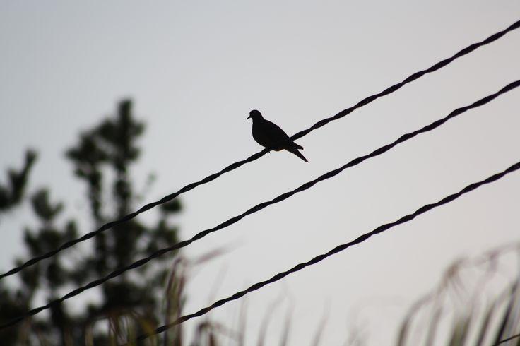 Bird// MS