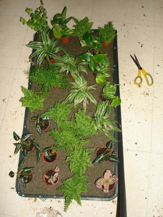 Make Your Own Living Wall/aquaponics