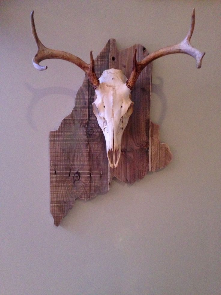 European mount, white tail deer on a pallet wood base