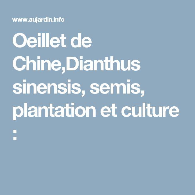 Dianthus Œillet fiche culture :