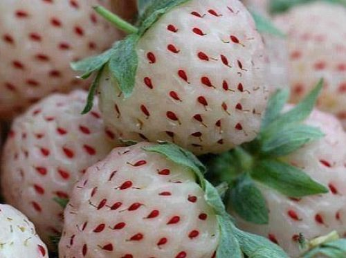 How To Grow Pineberries...http://homestead-and-survival.com/how-to-grow-pineberries/