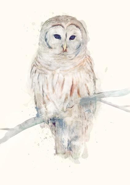 Amy Hamilton / Owl Art Print