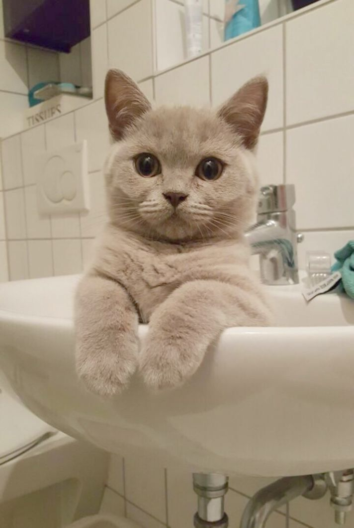 Cats And Kittens Rehoming Cats And Kittens Introducing Cats Cat Pics Pretty Cats