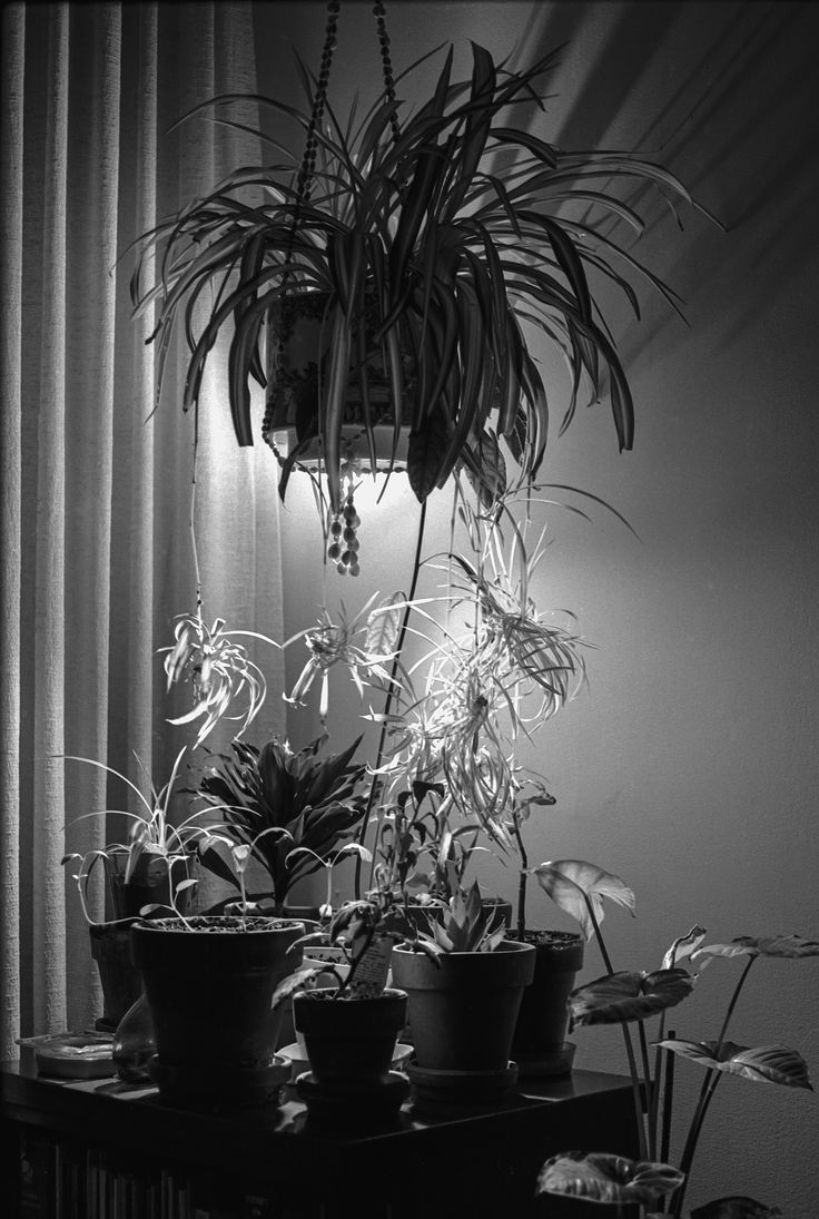 He occupied a windowless government office next to mine.  Couldn't stand the sterility.  Created an indoor garden to keep him sane.  I came in with my camera early one morning and made this photograph  with a 45-second exposure at f11, with a one-degree spot-meter, Nikon FM2 Camera and Nikkor 55mm Nikkor lens.