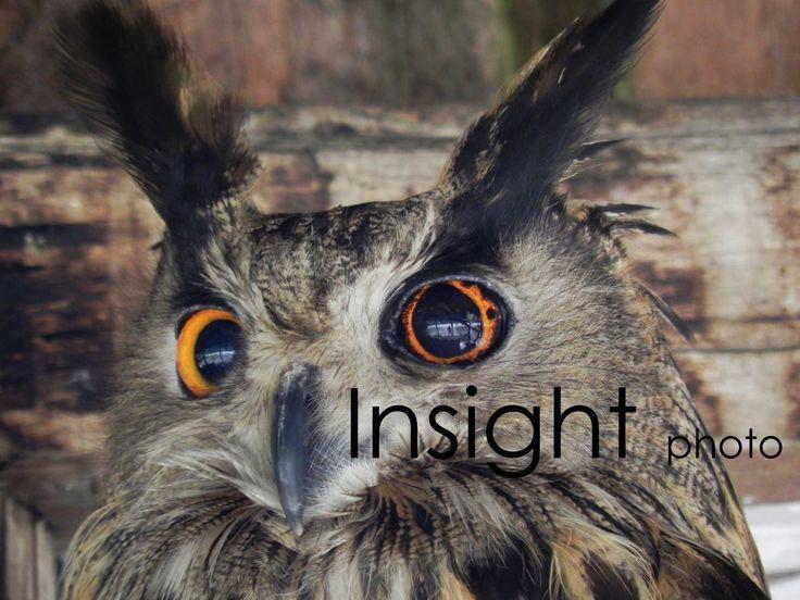 Nature Insight