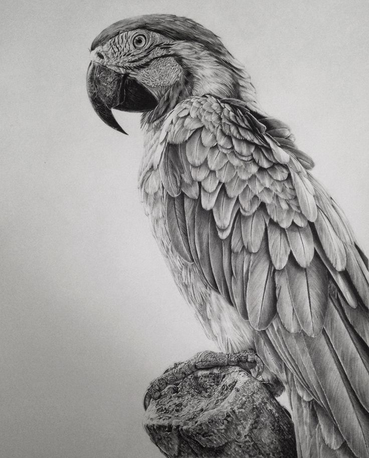 Monica Lee These photorealistic graphite drawings will blow you away