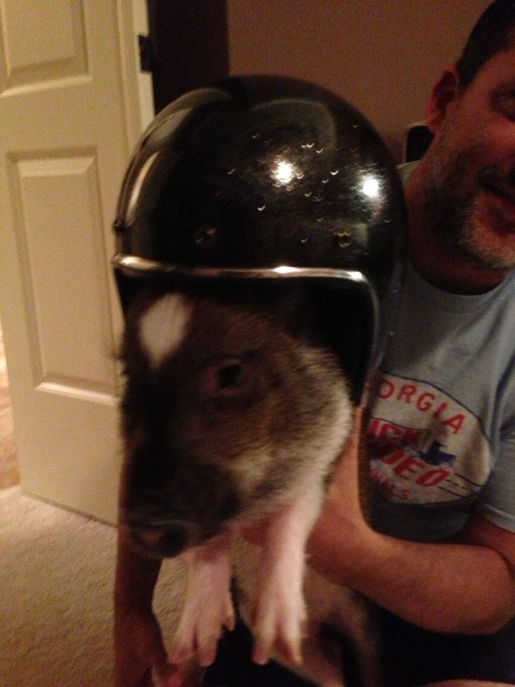 Backup driver is ready for sunday porkchop pic twitter com 9h3u4l7sum