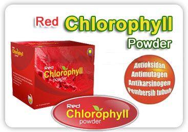 Red Chlorophyllin Powder Suplemen Penetral Racun Tubuh Alami. Red Chlorophyllin Powder sangat bermanfaat untuk tubuh anda yaitu sebagai Antioksidan, Antimutagen, Antikarsinogen dan Pembersih Tubuh. Red Chlorophyllin Powder adalah minuman kesehatan dengan bentuk serbuk yang dibuat dari daun amaranthus gangeticus dipadu dengan daun cawi yang mempunyai kandungan Red chlorophyllin (Khlorofil Merah) lebih baik dibandingkan dengan yang berasal dari daun tanaman lain.