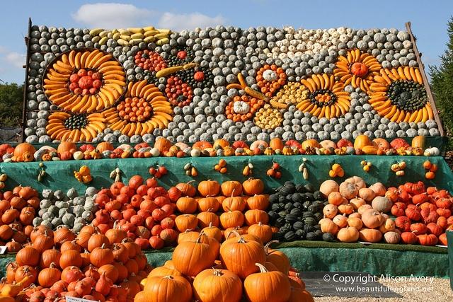 The Pumpkin Man, Slindon Woods, West Sussex