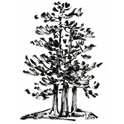 Grands pins blancs || White pine tree || #inkonpaper