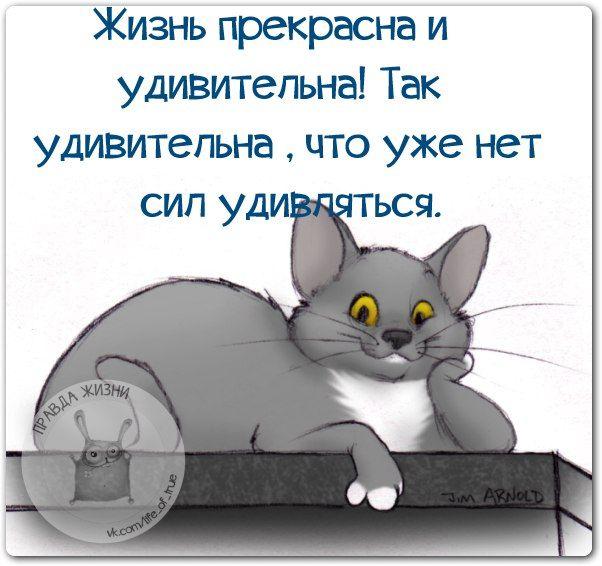 https://cs7063.vk.me/c540107/v540107123/14884/6AswBpol_pI.jpg