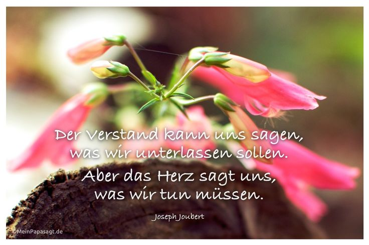 Mein Papa sagt...  Der Verstand kann uns sagen, was wir unterlassen sollen. Aber das Herz sagt uns, was wir tun müssen. Joseph Joubert   #Zitate #deutsch #quotes      Weisheiten & Zitate TÄGLICH NEU auf www.MeinPapasagt.de