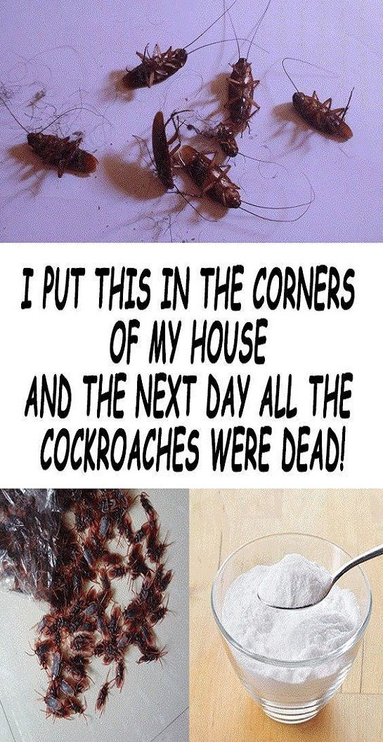Cockroaches are disgusting insects or better said pests that thrive in houses, particularly in the dark and warm places. These pests and feeding by scavenging and that is the reason why they carry dangerous diseases.    There are many different ways in which you can get rid of the cockroaches, but most of the products specially created to destroy these pests are loaded with poisonous chemicals. These chemicals are dangerous for your and the health of your children, as well.    Below we are…