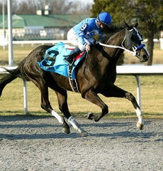 """""""Black Onyx"""" - 2013 Kentucky Oaks & Derby   May 3 and 4, 2013   Tickets, Events, News #KentuckyDerby #Derby #Horses"""