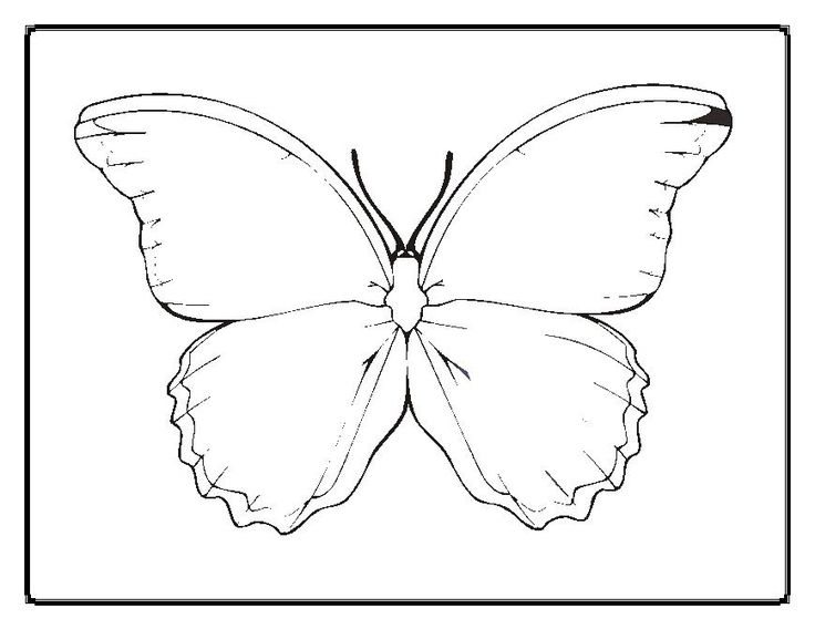 blank butterfly coloring pages