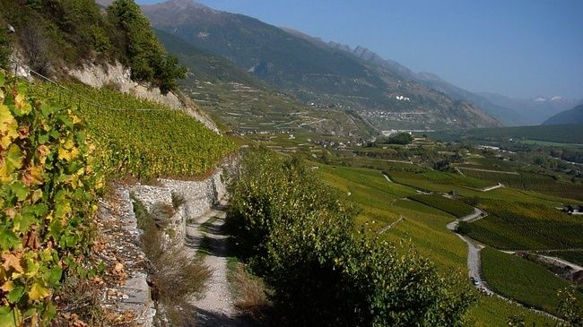Vineyard Trail between Salgesch and Sierre - This 2.5-hour tour is like a walk through an open-air museum.