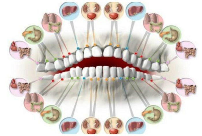 Δόντια: Συνδέονται με κάθε Όργανο μας και τις Ασθένειές του δεν είναι αδρανή σώματα, παρέχουν μοναδικές αισθητηριακές πληροφορίες που υποκινούν βιολογικές
