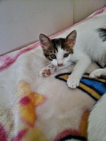 KEDİ SEVENLER CAT LOVERS - Topluluk - Google+
