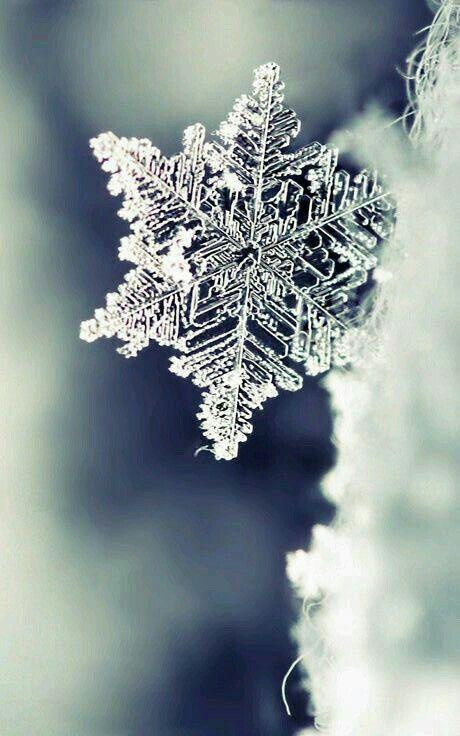 Copo de nieve real!!!! Dios muestra su creatividad aún en los detalles más pequeños.