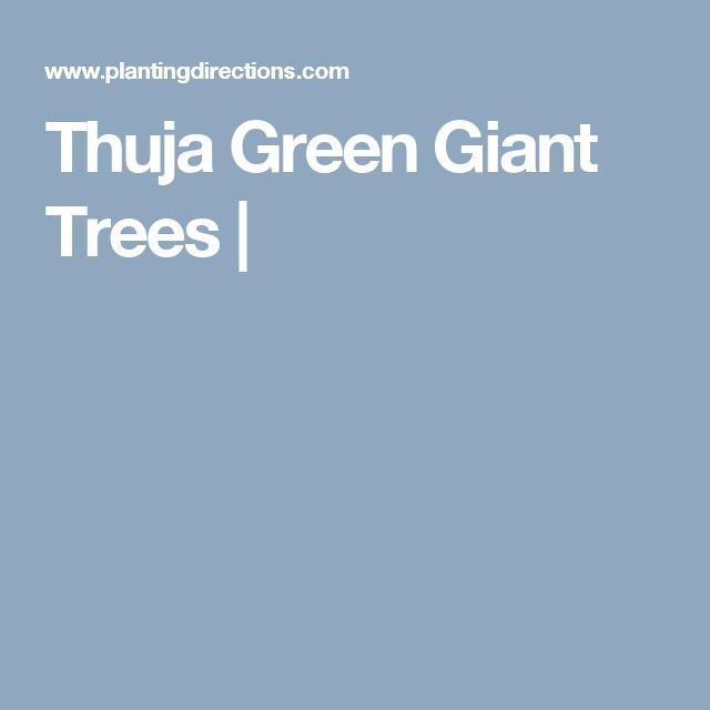 Thuja Green Giant Trees |