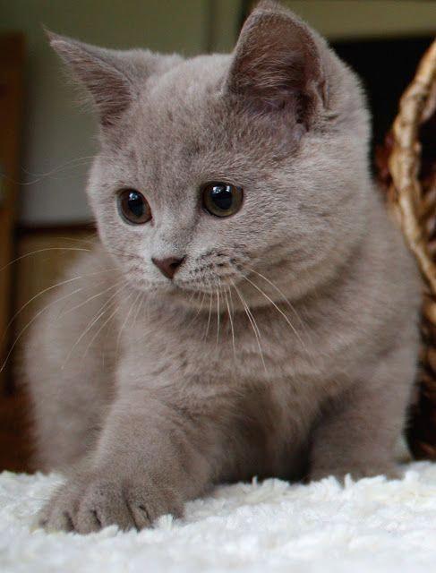 65 Tierbabys, die Ihr Herz mit Freude füllen können | FallinPets   – Cat Crazy